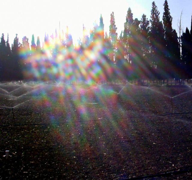ממטרות בשדות אשדות. אור השמש נפגש עם המים ויחד יוצרים את צבעי הקשת. צילם: מיכה תמיר
